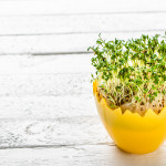 Fresh sprouts in easter egg, spring diet concept