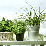 housplants  in white pots on the bedroom background