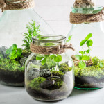 small-jar-live-forest-save-earth-concept-white-table-80054779